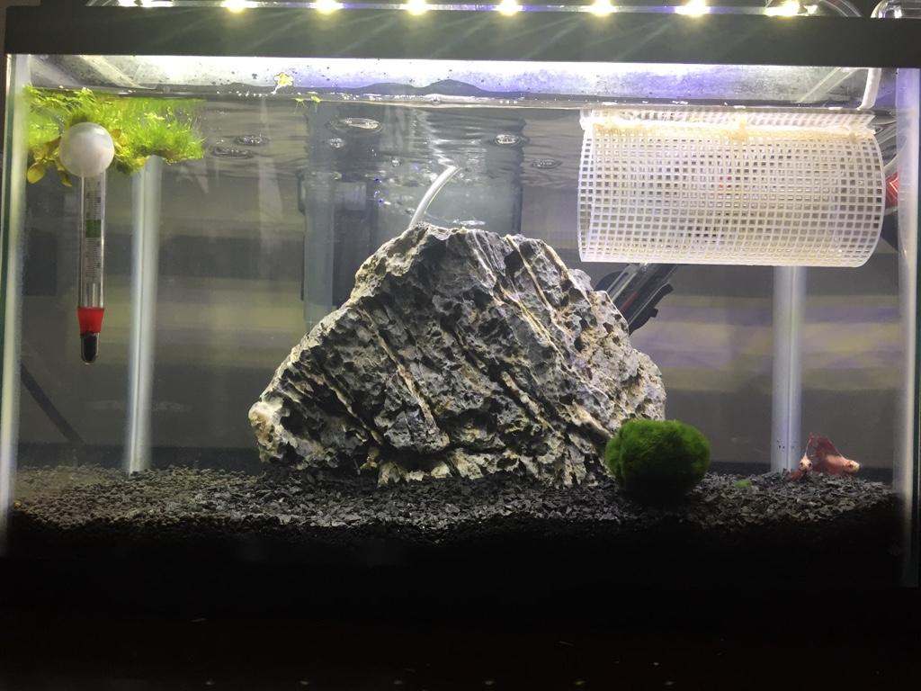 5 5 gallon planted betta tank! - The Planted Tank Forum