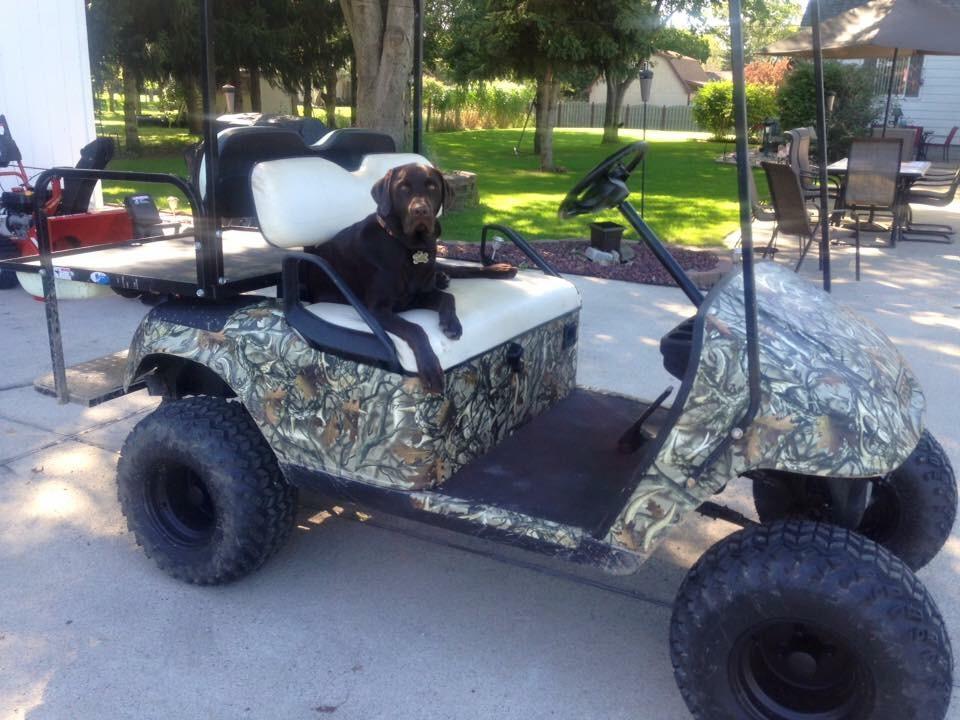Buggies Gone Wild Golf Cart Forum 36v To 48v Conversion