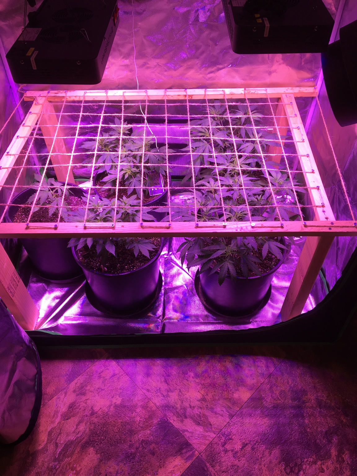 Need advice on LED wattage/par for my 4x4 tent | Grasscity