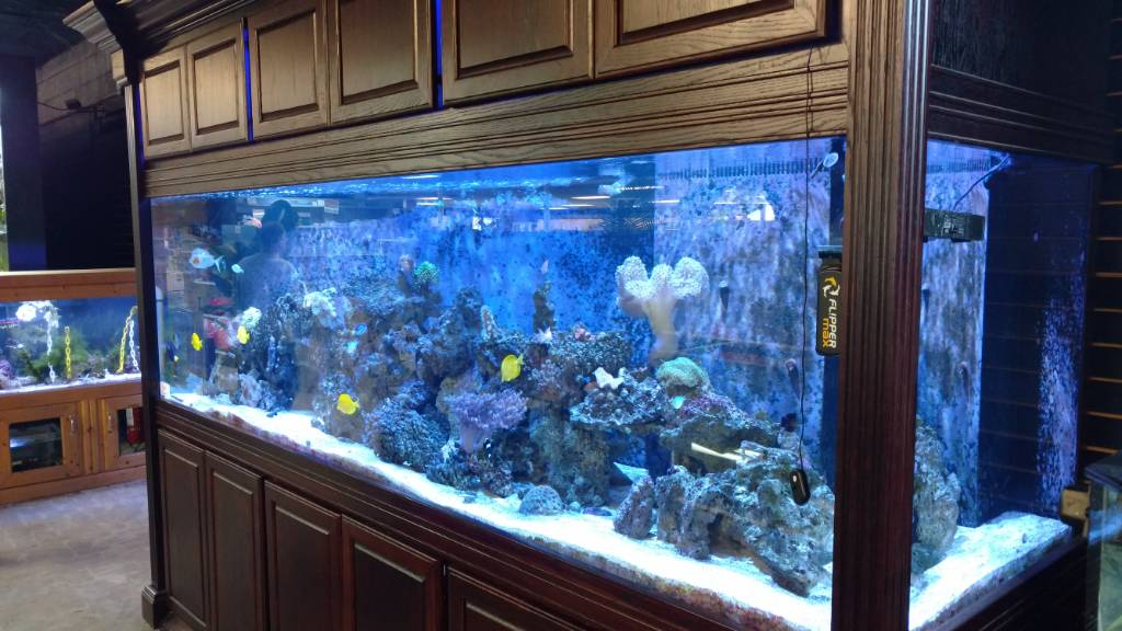 Lfs fish pictures page 2 270170 for 200 gallon fish tank for sale