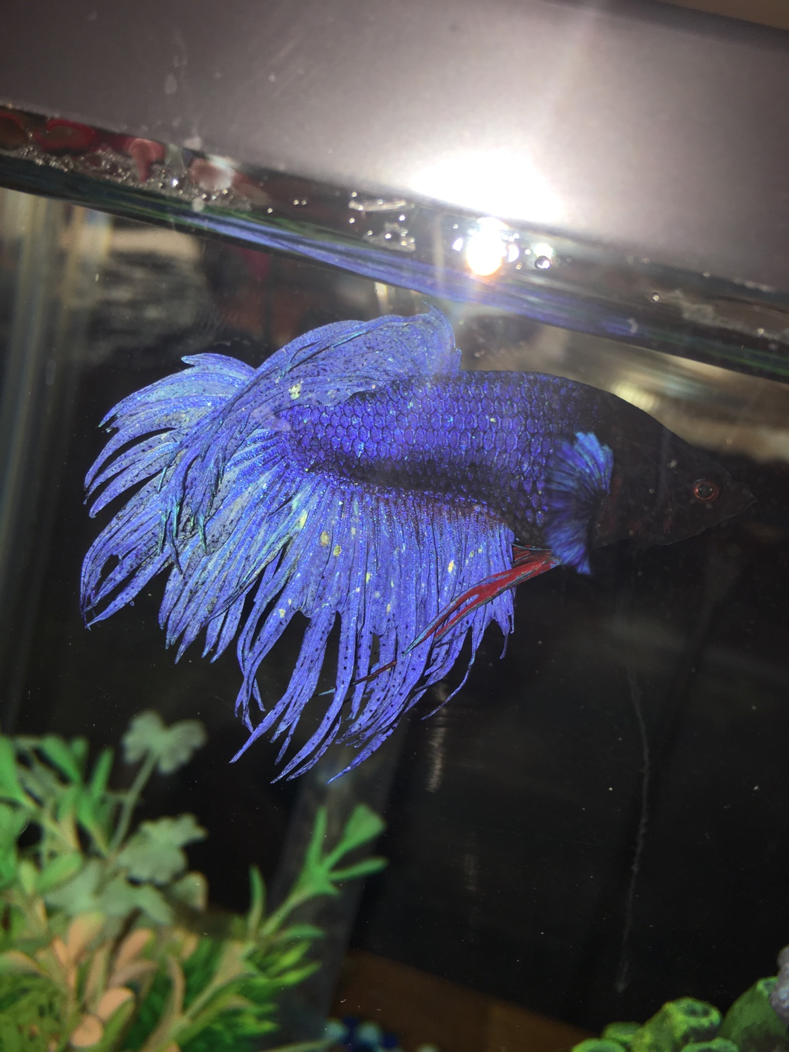 Sick betta 270757 for Sick betta fish