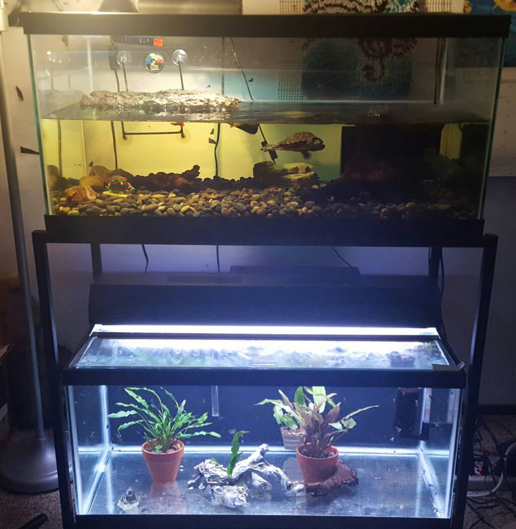 My craigslist success stories 271052 for 55 gallon fish tank petco