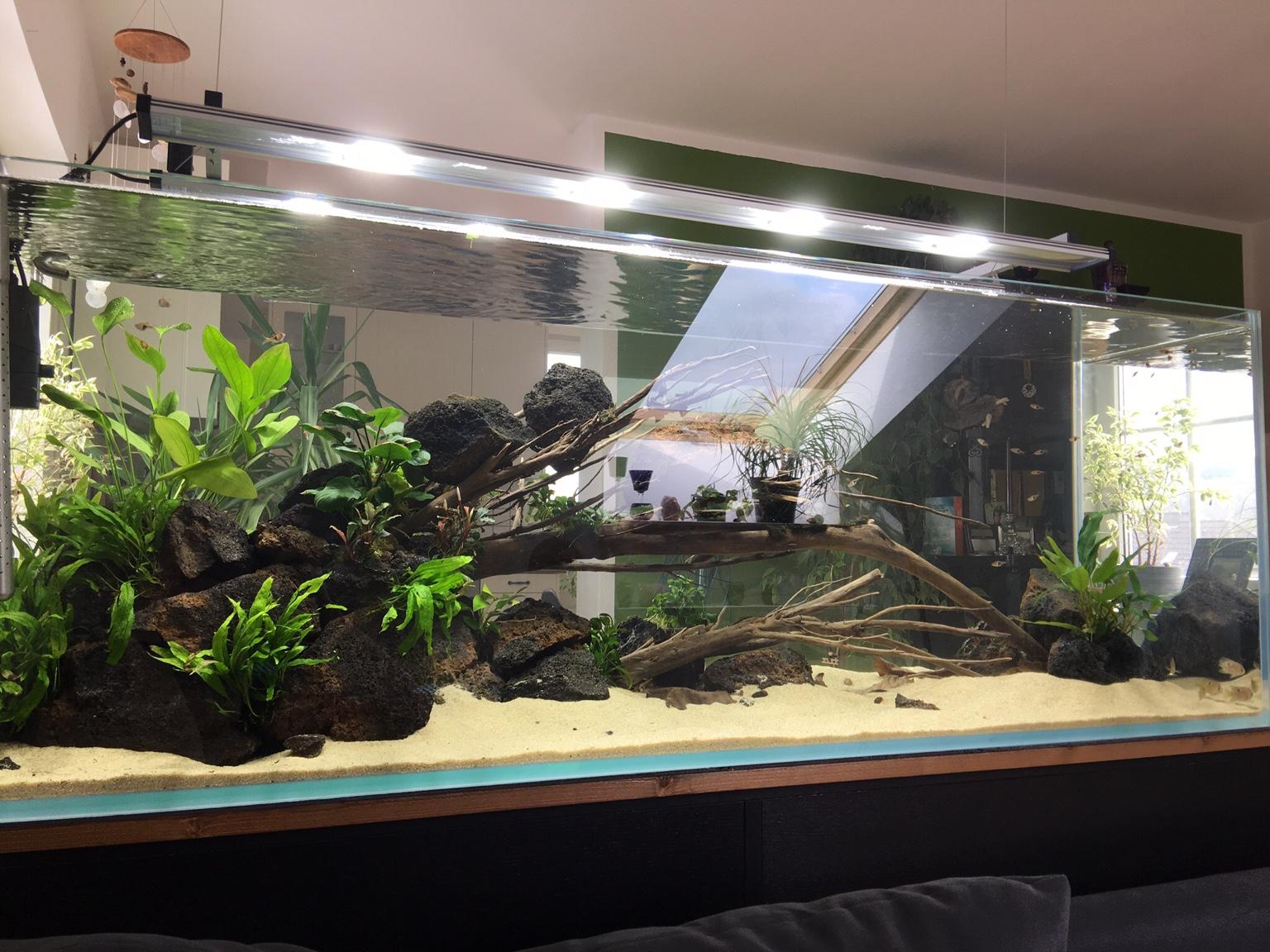 zwei in einem meine wohnzimmerpf tze aquarienvorstellung aquascaping forum. Black Bedroom Furniture Sets. Home Design Ideas