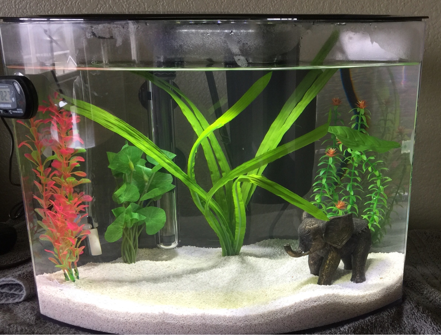 Setting up new betta tank 272300 for What type of water do betta fish need