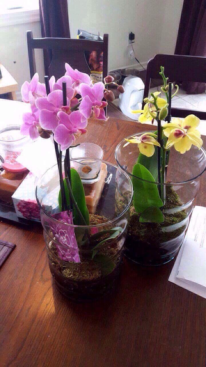 Orchid In Glass Vase Orchid Forum Orchid Care