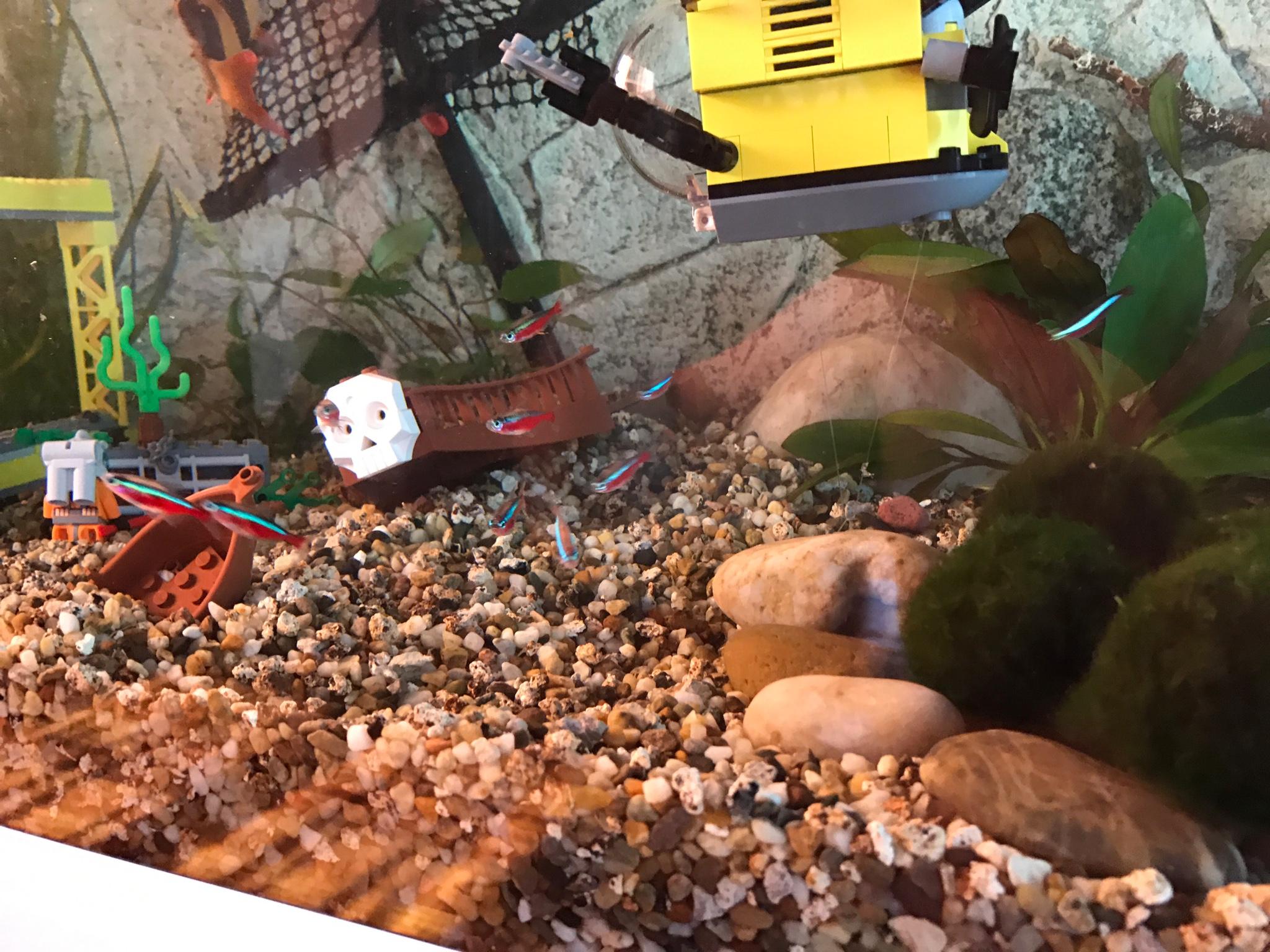 allestimento acquario dolce con piante vere: carassi che mangiano ... - Allestimento Acquario Dolce Con Piante Vere
