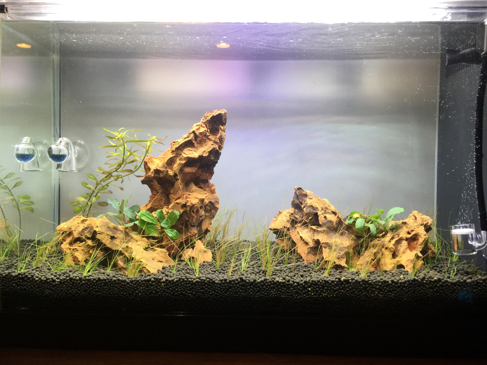 I Recently Setup An Old Fluval Spec V That Iu0027ve Decided To Attempt A Simple  Scape And Try My Hand At More Advanced Plants And CO2.