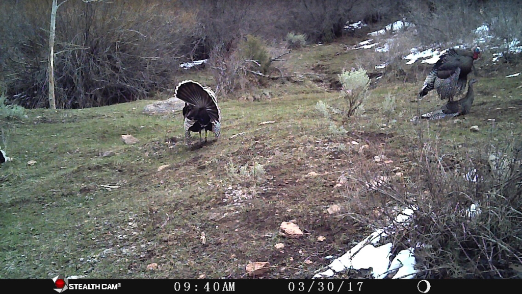 Utah wildlife network view single post caught in the act for Nm game and fish proclamation 2017