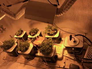 6 plant Under Current - First DWC grow | Grasscity Forums - The #1