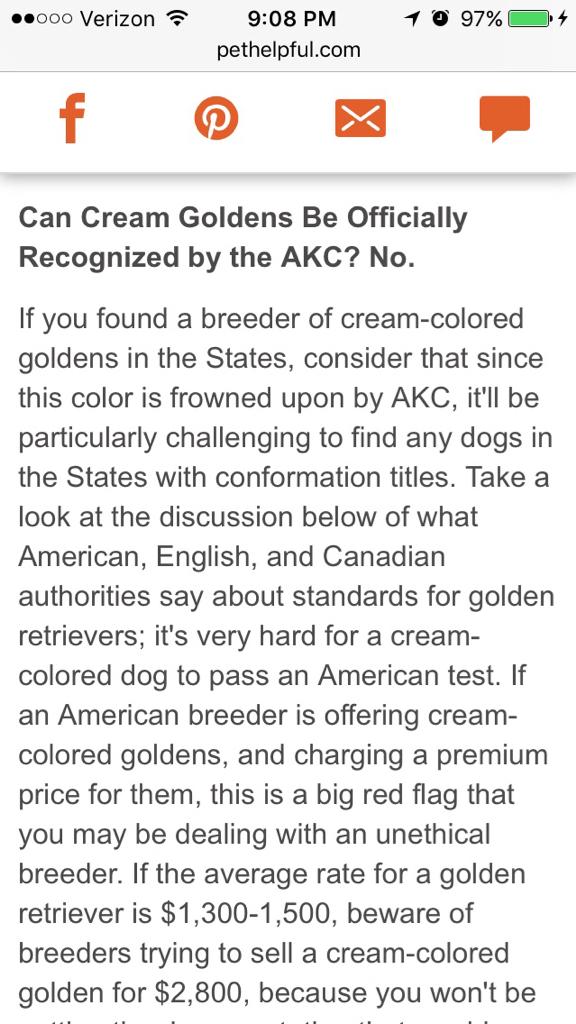 Can an English cream golden still be AKC registered