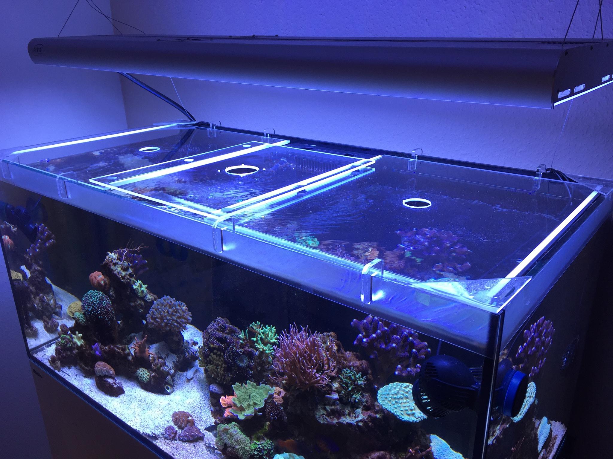 Aquarium Selber Bauen Plexiglas : springschutz reefer 250 deluxe reefer 250 dein meerwasser forum f r nanoriffe ~ Watch28wear.com Haus und Dekorationen