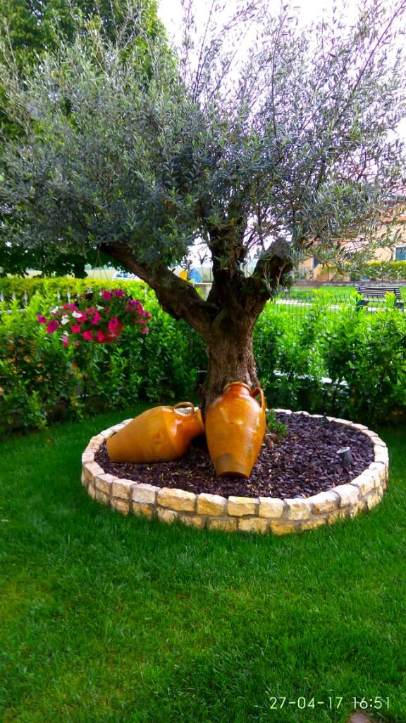 Consiglio fiori per aiuola ulivo e giardino forum di for Piante da aiuola