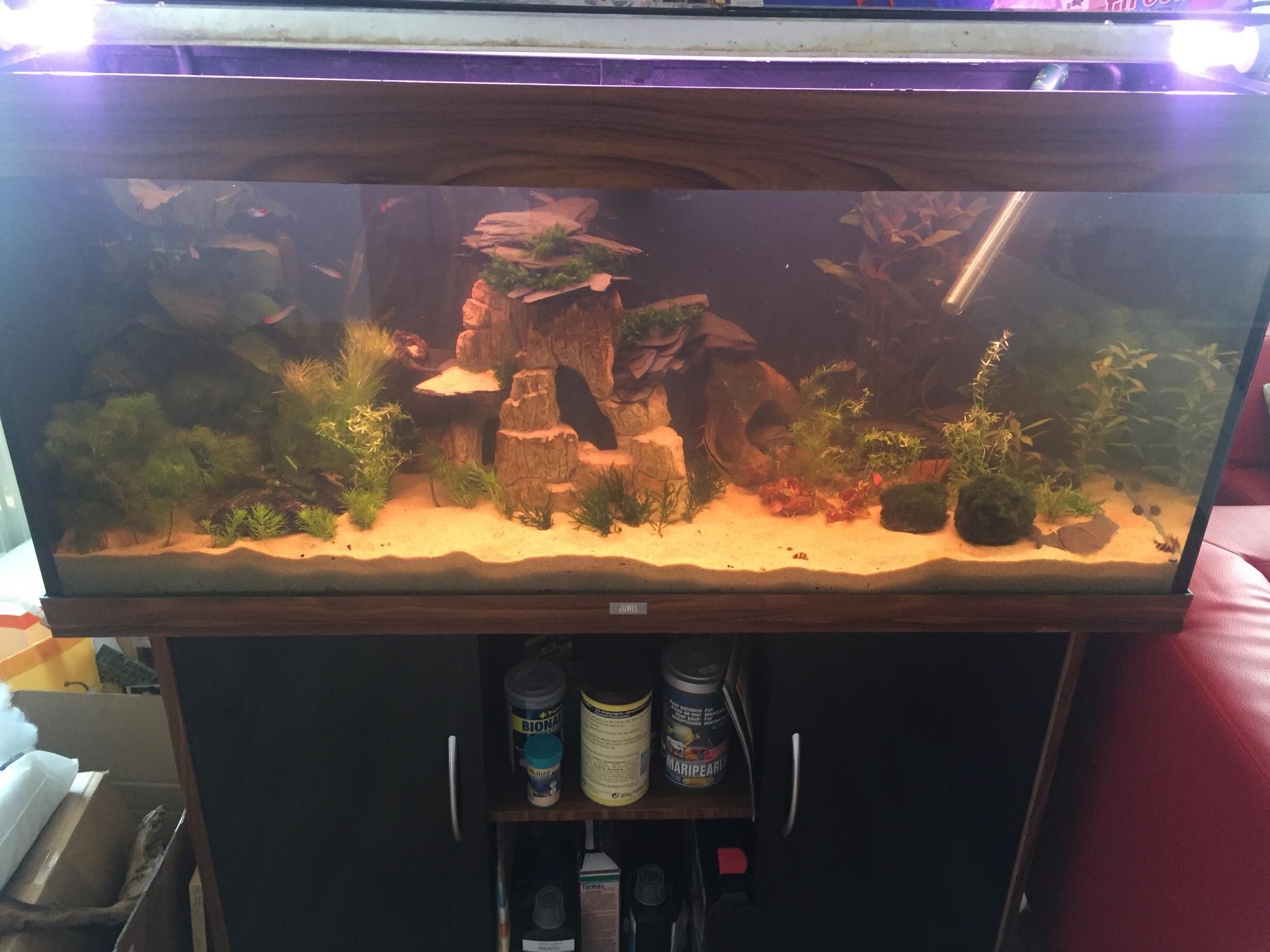 Mein 240l aquarium aquarium forum for Mein aquarium