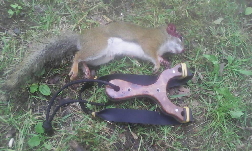 Squirrel For The Pot Pest Control The Slingshot