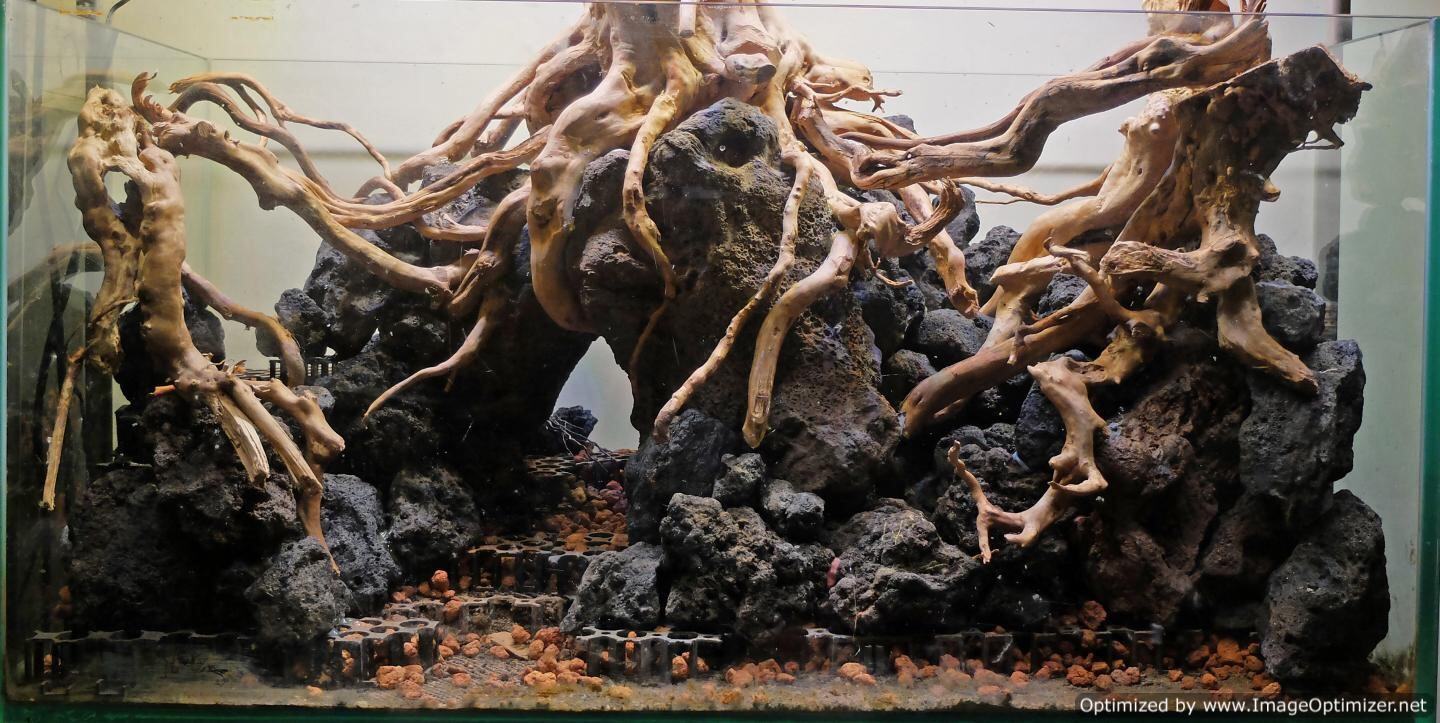 Spiderwood and driftwood | AquaScaping World Forum