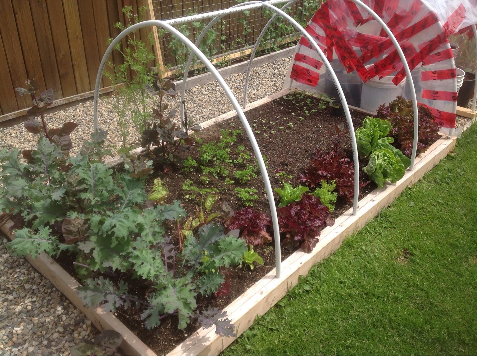 2017 veggie garden thread