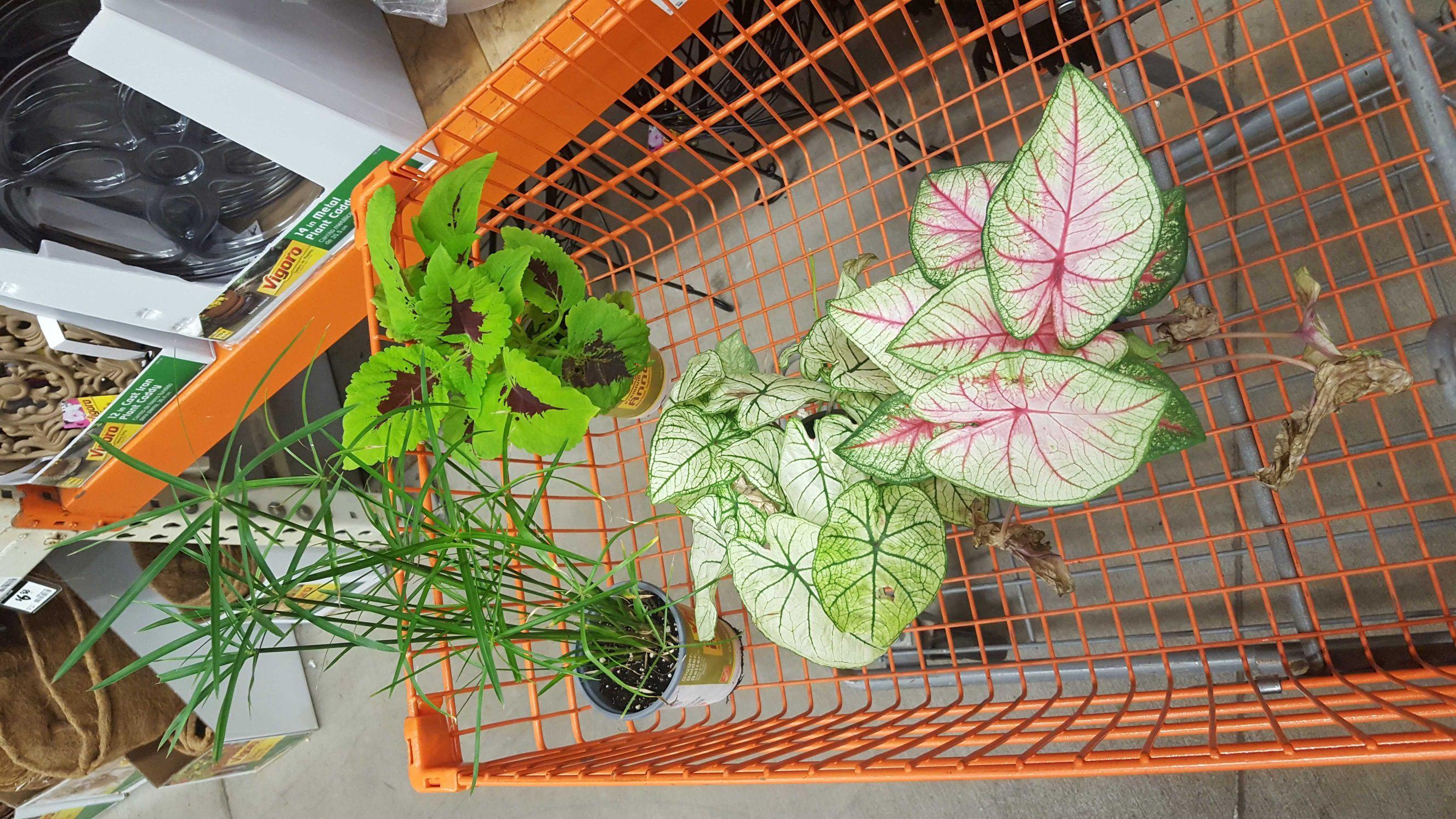 Plant) [ Img]