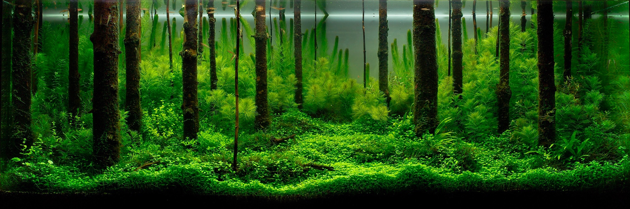 aquascaping layout wald forest einrichtung und gestaltung aquascaping forum. Black Bedroom Furniture Sets. Home Design Ideas
