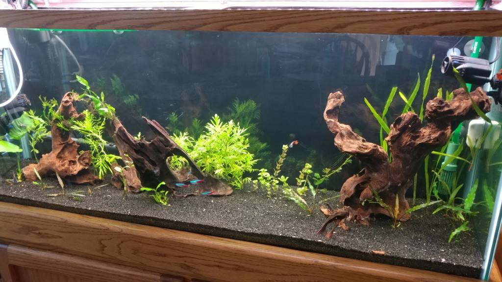 Weeping willow look - The Planted Tank Forum