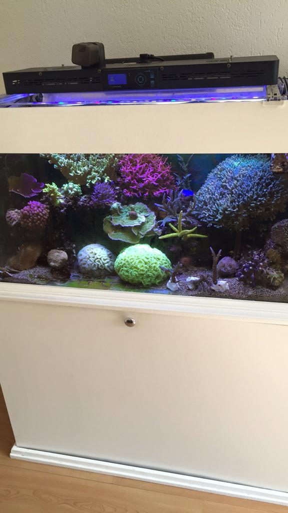 Noord Holland - Aquarium 100x50x50 met sump en kast | Zeewaterforum.info