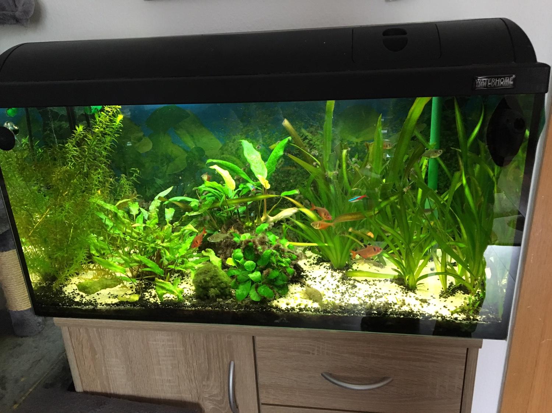 algen massive probleme mit pinselalgen aquarium forum. Black Bedroom Furniture Sets. Home Design Ideas