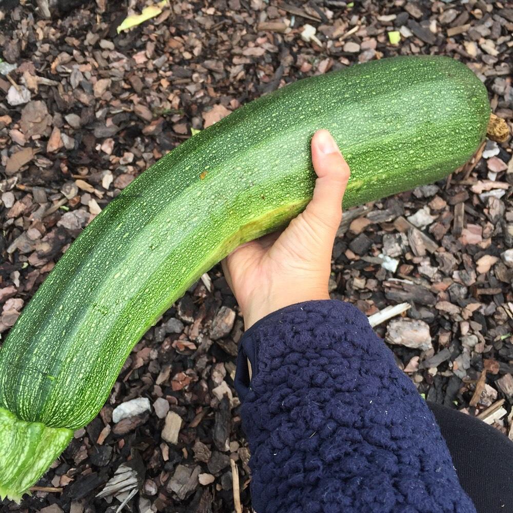 Raised Bed Plan - Spinach, Soybeans/Edamame Beans, Zucchini, Autumn Spinach