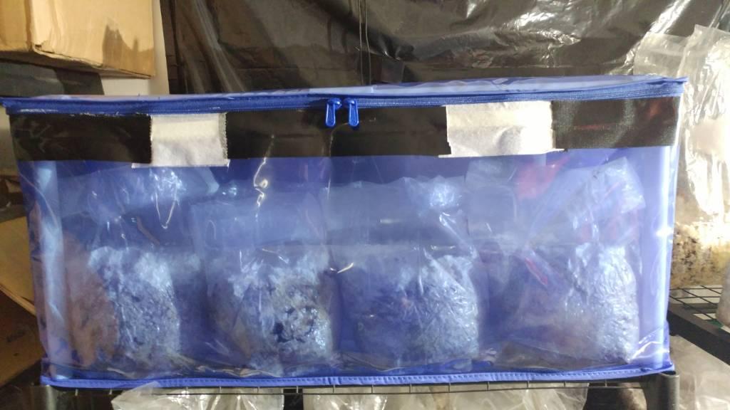How many quarts in 650g brick coir? - Fungi: Magic Mushrooms
