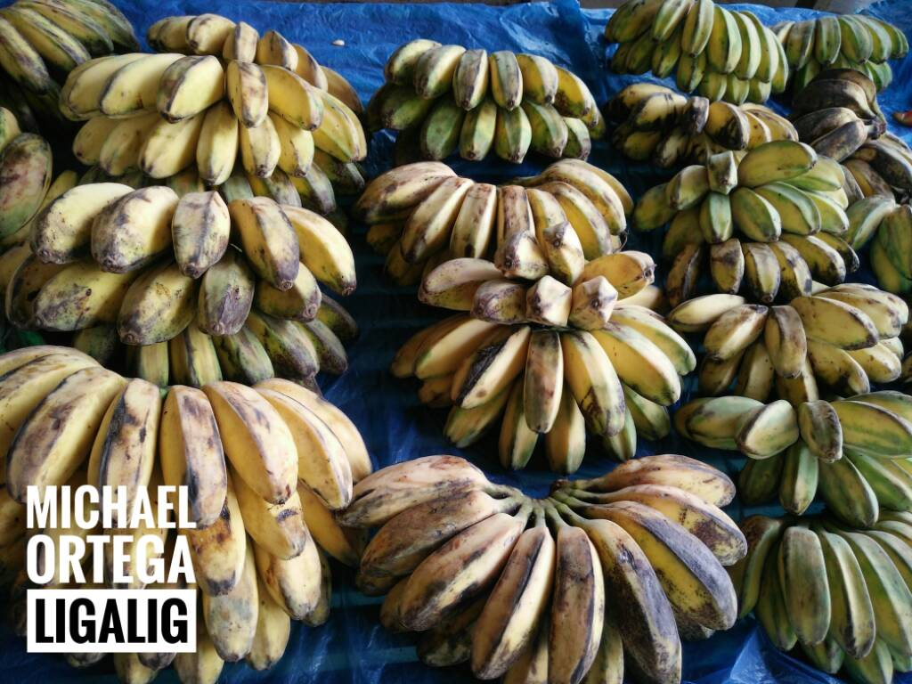 24d5b25b74263f44fa04cef47703d46f - Philippine Banana - Philippine Photo Gallery
