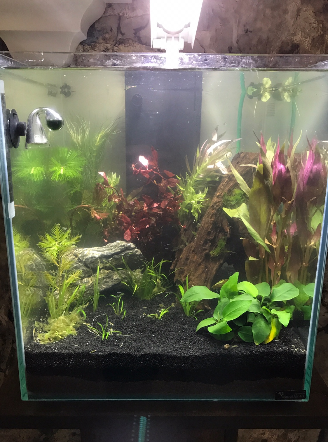 bis 54l besatz 40l nano seite 2 aquarium forum. Black Bedroom Furniture Sets. Home Design Ideas