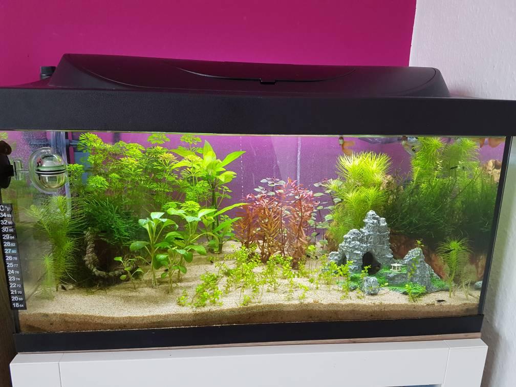 beleuchtung verbessern aquarium forum. Black Bedroom Furniture Sets. Home Design Ideas