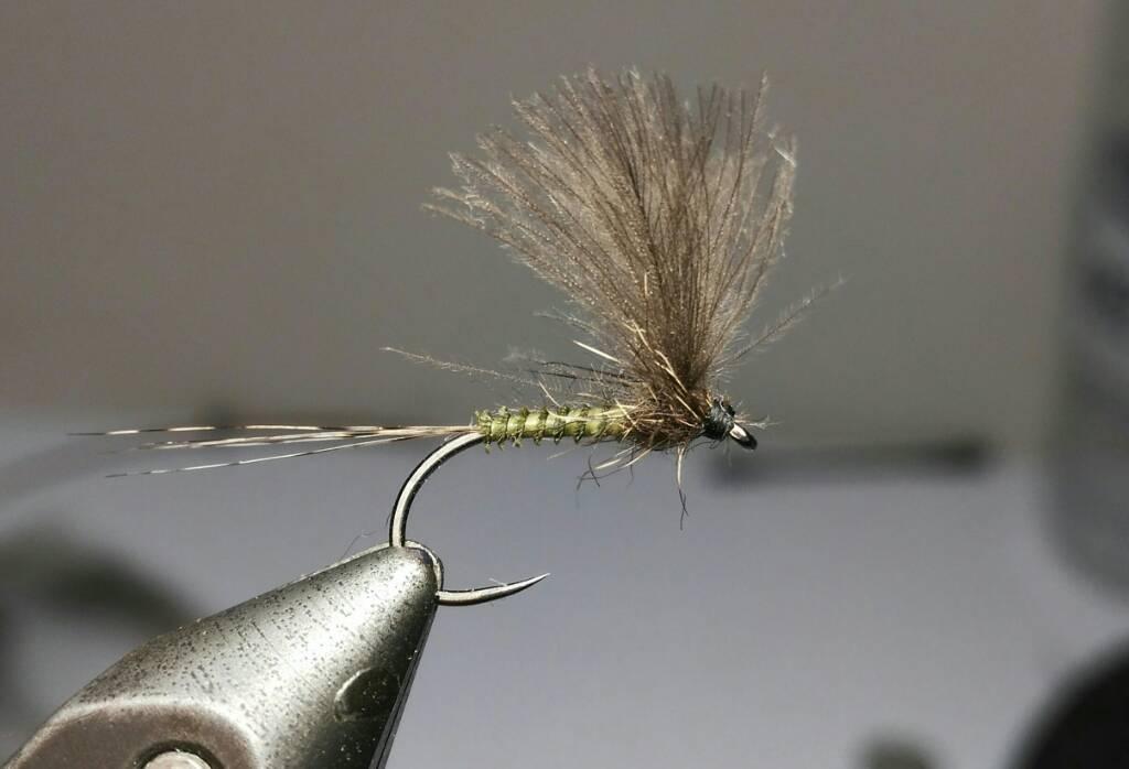 SBS split wing jednodnevka 0bfa02a4ed6bf50b69872f03c6b97828