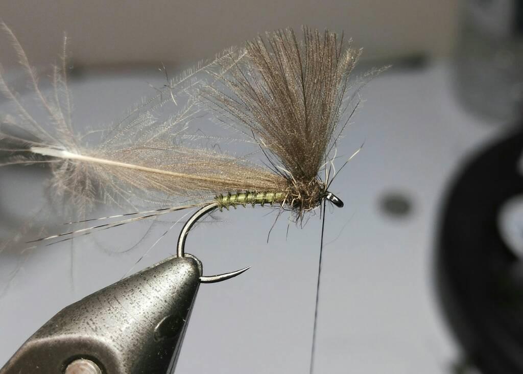 SBS split wing jednodnevka 0f406deca3ae586fc3a88f0db633ba72