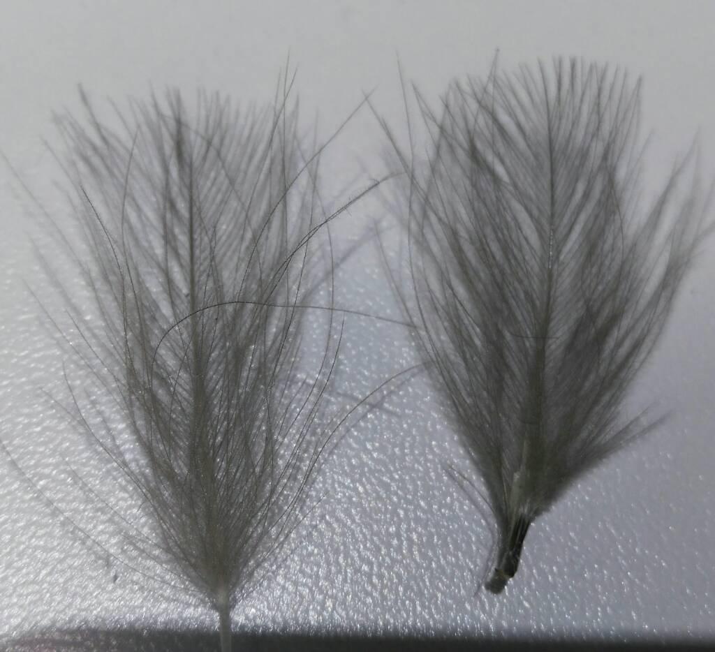 SBS split wing jednodnevka 1989979ccea820c361009735a1925938