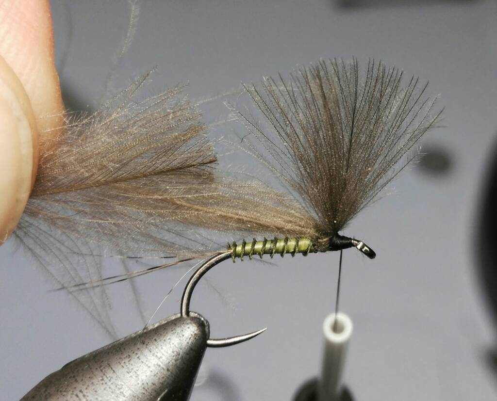 SBS split wing jednodnevka 1bf0eb560fdfb8c48f15c5e9c4f8263b