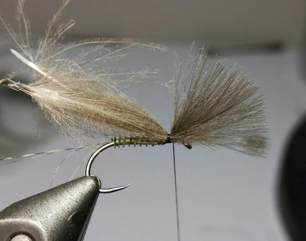 SBS split wing jednodnevka 5ff314d9001c674fb4b0897d83e45c98