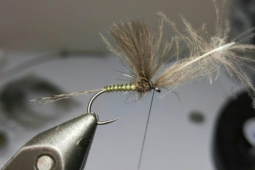 SBS split wing jednodnevka A4ff18dad55197224d39a25374c10527