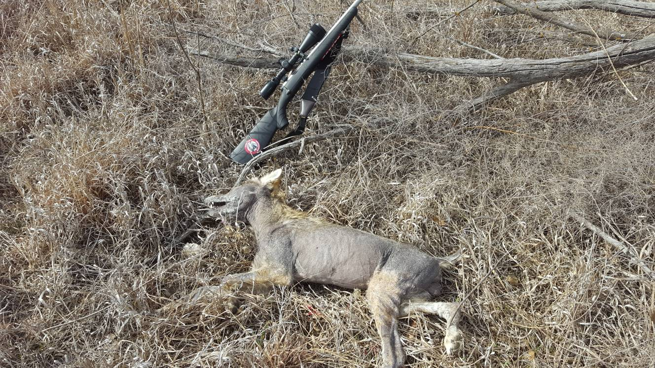 17 WSM rimfire and Coyotes - FOXPRO Forums