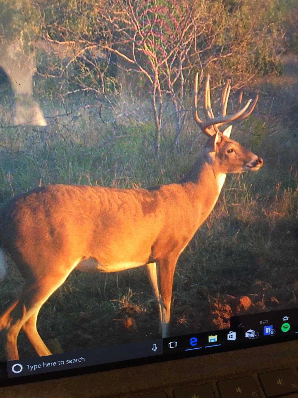 Blood Tracking Dog Needed - Hood County - TexasBowhunter com
