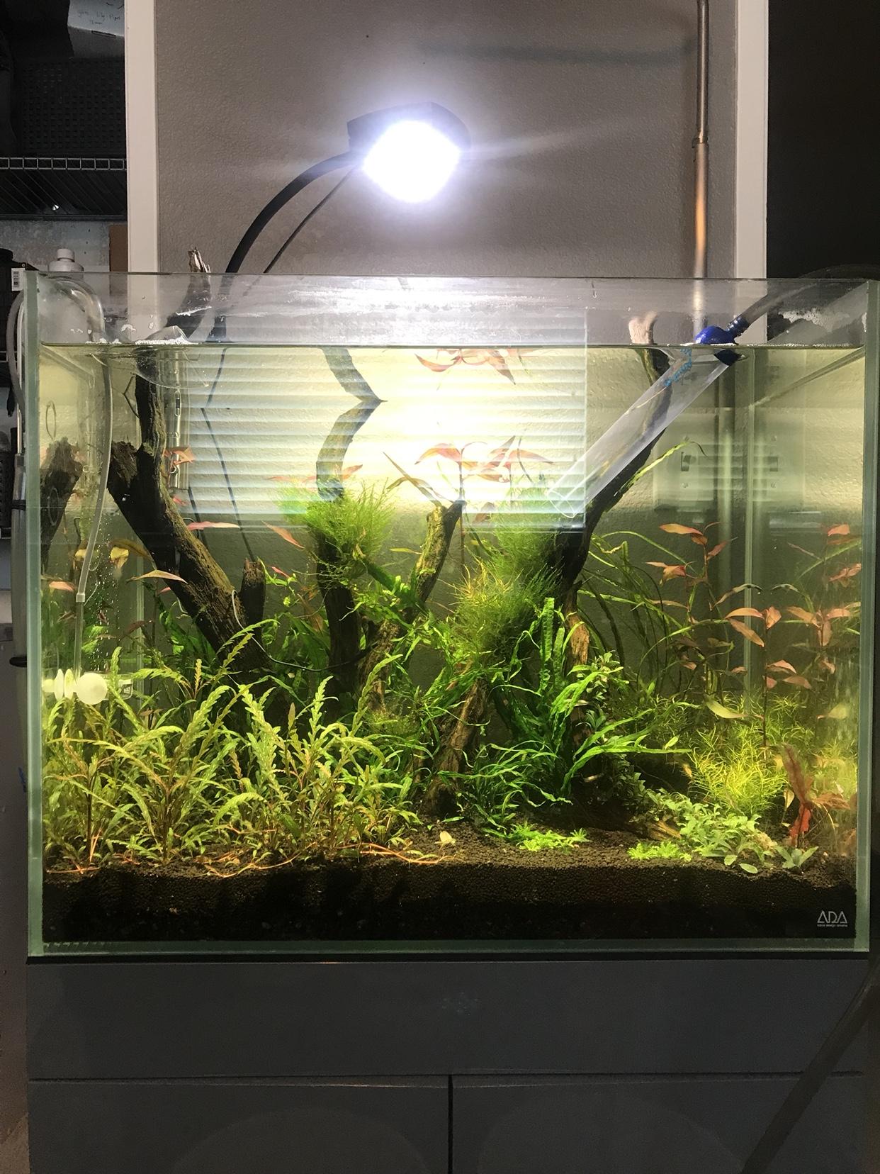 D&d Ai Prime Freshwater Hd Led Light Black Pet Supplies