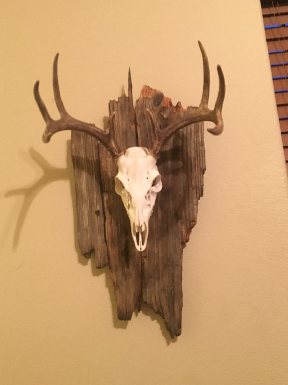 First Euro Mount Texasbowhunter Com Community Discussion