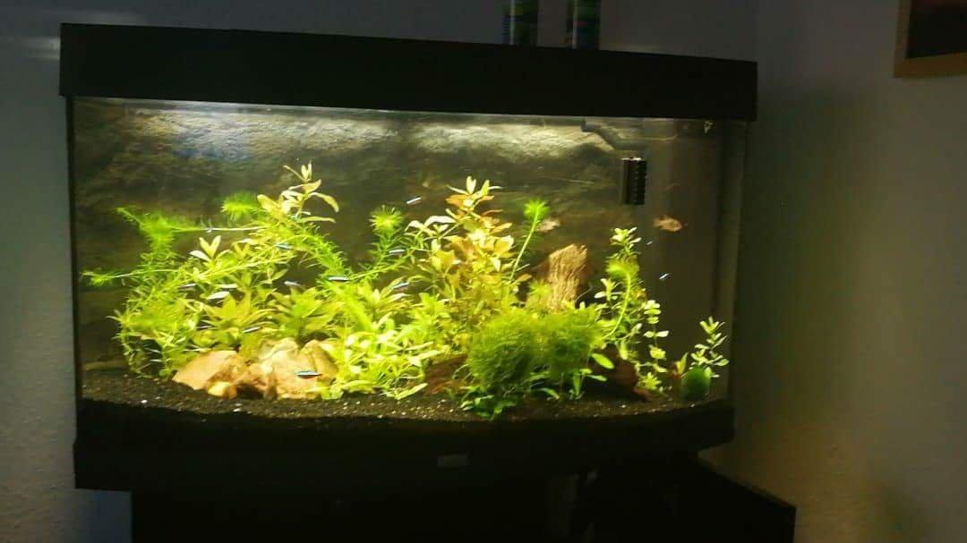 180 liter anlehnung an s damerika aquarium forum. Black Bedroom Furniture Sets. Home Design Ideas