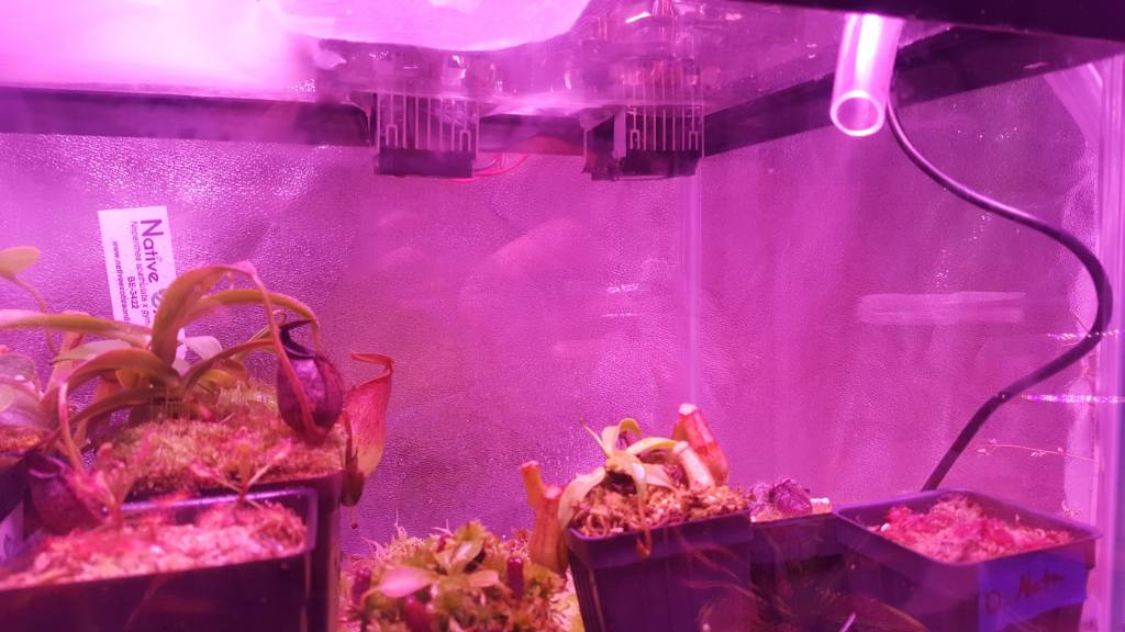 How to build a Peltier cooler : Terrariums, Mini Bogs, and Greenhouses