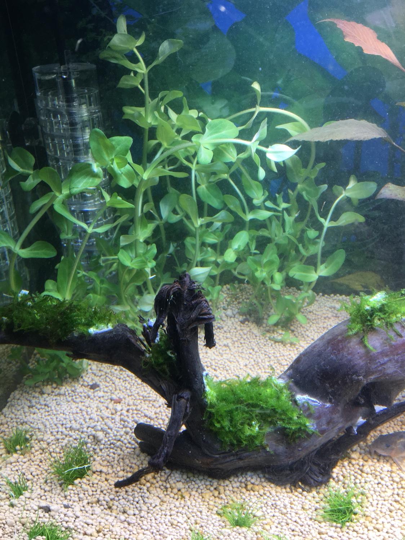 pflanzen was gebe ich meinen pflanzen aquarium forum. Black Bedroom Furniture Sets. Home Design Ideas