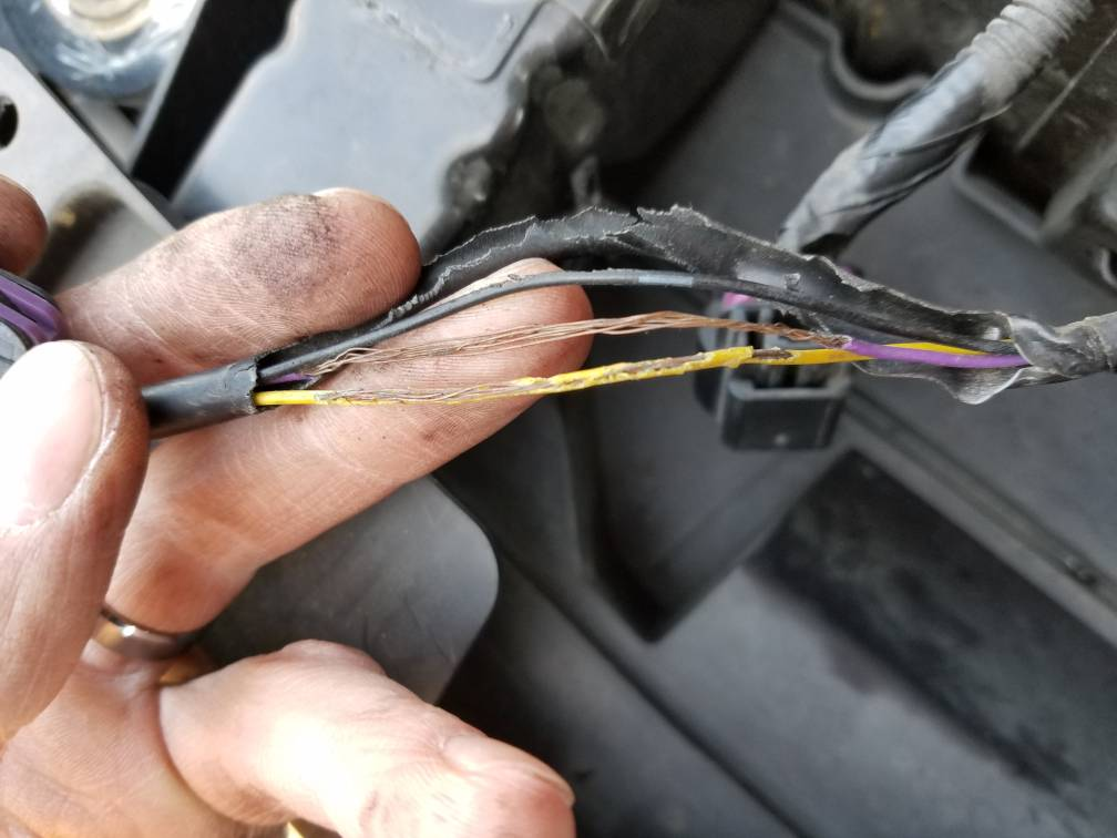 45fb2f6fe492edda00051fe09e3b2823 silveradosierra com \u2022 found some burnt wires electrical