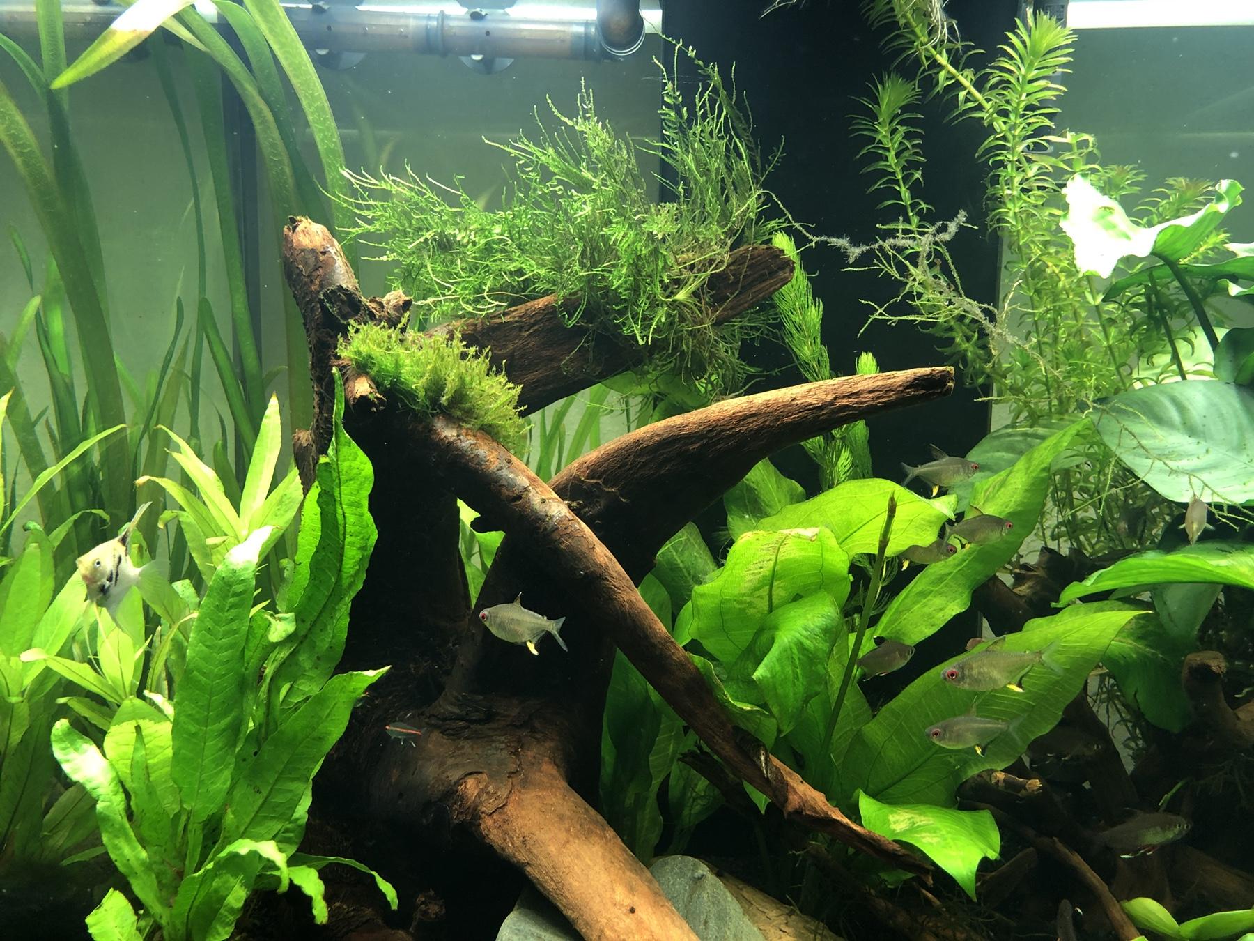 fragen zu wasserwerte schwebteilchen und filterreinigung aquarium forum. Black Bedroom Furniture Sets. Home Design Ideas
