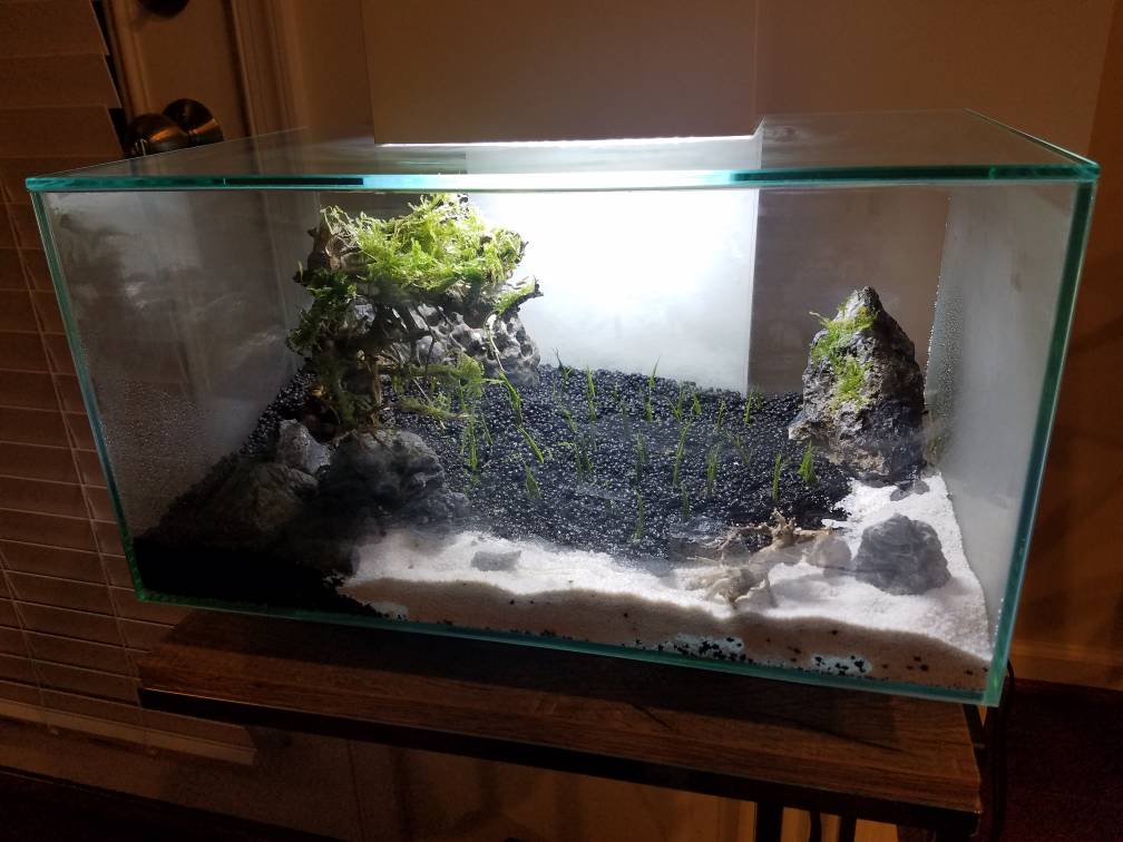 Fluval Edge 6 Gallon Bonsai Aquascape Aquatic Plant Central