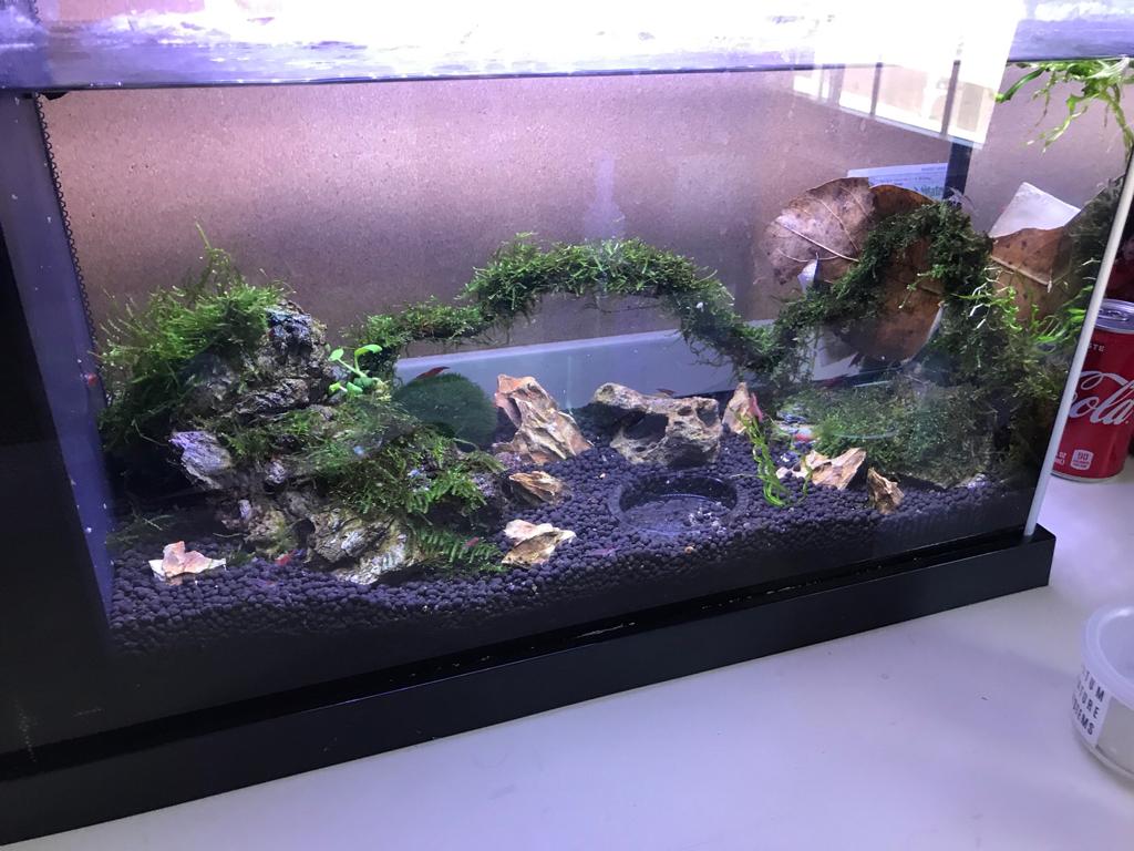 fluval spec v aquascape the planted tank forum