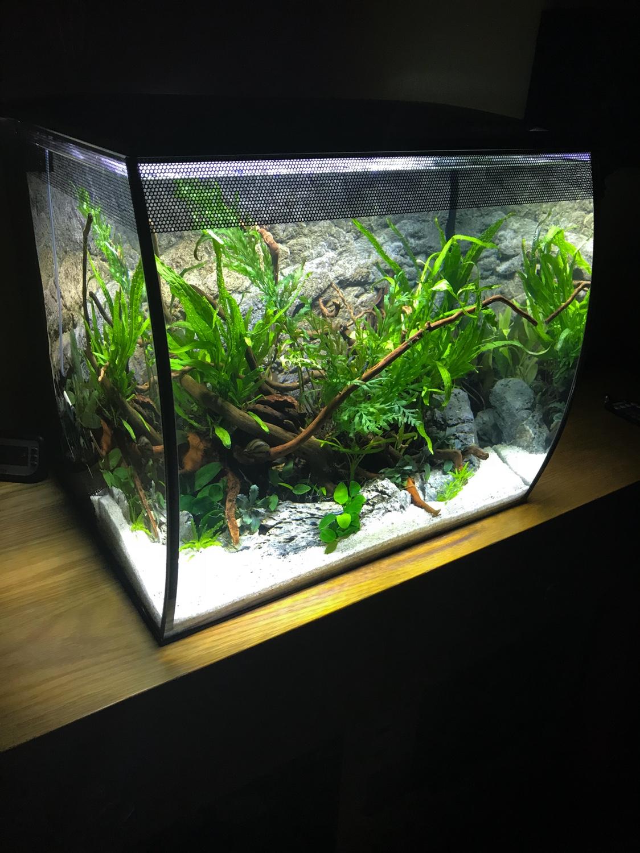Fluval Flex - Island Scape   UK Aquatic Plant Society