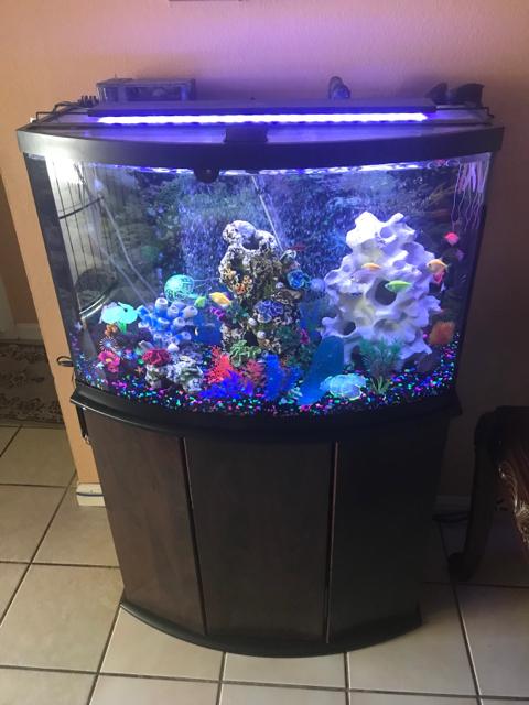 36 Gallon Bow Front Aquarium 1000 Aquarium Ideas