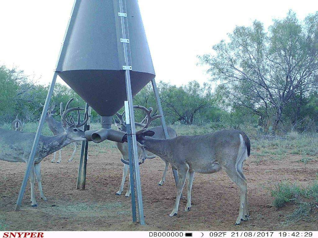 Boss Buck Feeder | Crossbow Nation Forum
